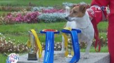 Cel mai frumos câine din România, campion național și la căutare-salvare