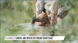 Europa are nevoie de păduri sănătoase | VIDEO
