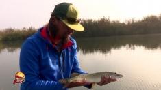 Delta Dunării, paradisul pescarilor sportivi