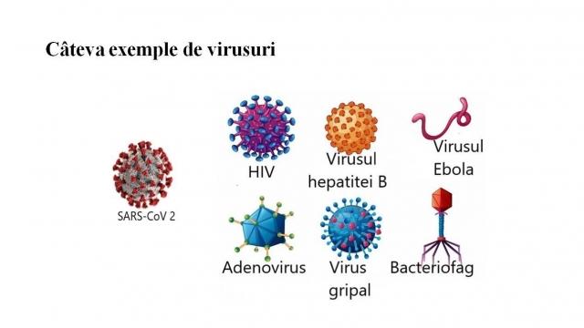 Biologie XII 18 decembrie