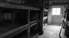 """""""Amintiri din infern"""": Auschwitz 76"""