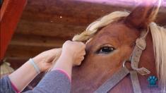 """Din multă iubire pentru animale... la """"Petmania"""", TVR 1"""