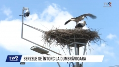 Berzele se întorc la Dumbravioara | VIDEO