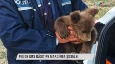 Pui de urs găsit pe marginea șoselei | VIDEO