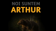 Întrebări după moartea ursului Arthur, la