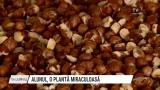 Alunul, o plantă miraculoasă | VIDEO