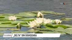 Delta din Sighișoara| VIDEO