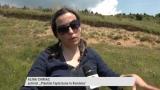 Păduri noi pentru județul Cluj   VIDEO