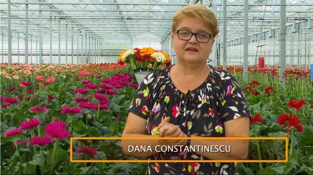 dana constantinescu