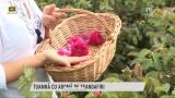 Toamnă cu aromă de trandafiri   VIDEO