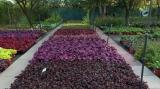 plante perene_secreteleplantelor