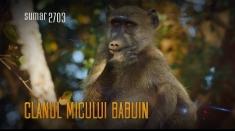 Jocuri de babuini, sâmbătă la Teleenciclopedia   VIDEO